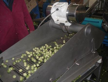 Mogensen SRSL Screen: Brussel sprout screen to remove loose leaves & stalks